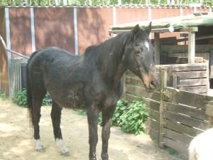 Baska (3)