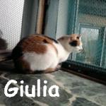 Gulia2