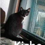 Kisha2