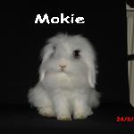 Mokie1