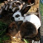 schneeflocke_Paul3