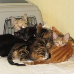 katzenfamilie vermittelt